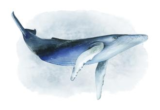 Watercolor Humpback I