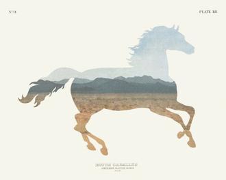 American Southwest Horse