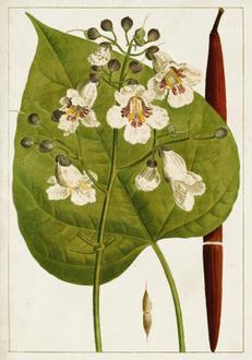 Antique Flowering Trees V