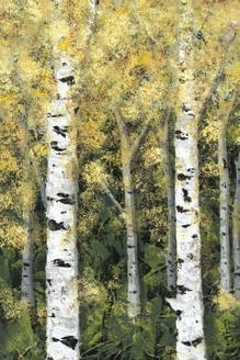 Birch Treeline I