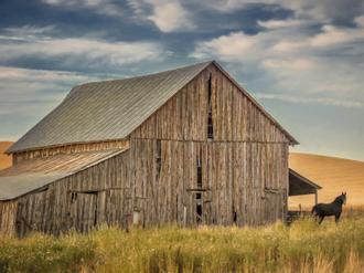 Farm & Field VI