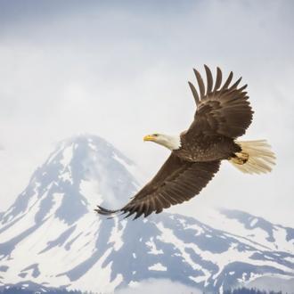 Majestic Eagle II