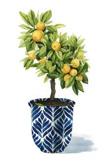 Fruit Tree I
