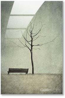 The Cherry Tree - Winter