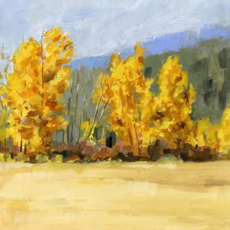 Golden Aspen Trees II
