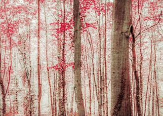 Pink & Brown Fantasy Forest