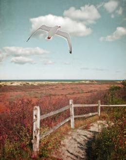 Gull over Coastal Trail