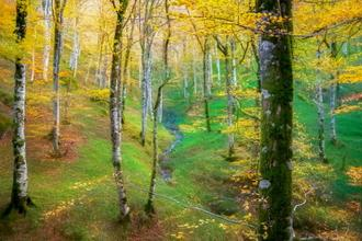 Dream of Birches