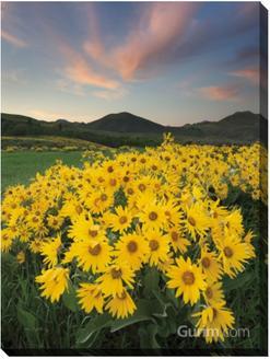 Methow Valley Wildflowers I
