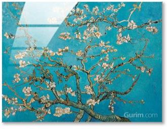 Almond Branches In Bloom, San Remy