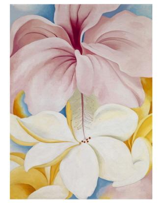 Hibiscus With Plumeria